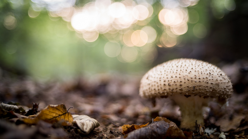 Ultron 28mm 2.0 mushroom forest wide open wald Bokeh background unsharp